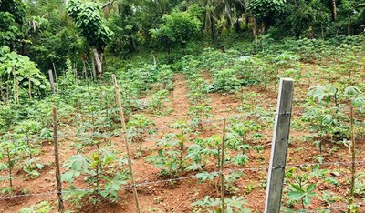 LAND FOR SALE IN KAHATUDUWA